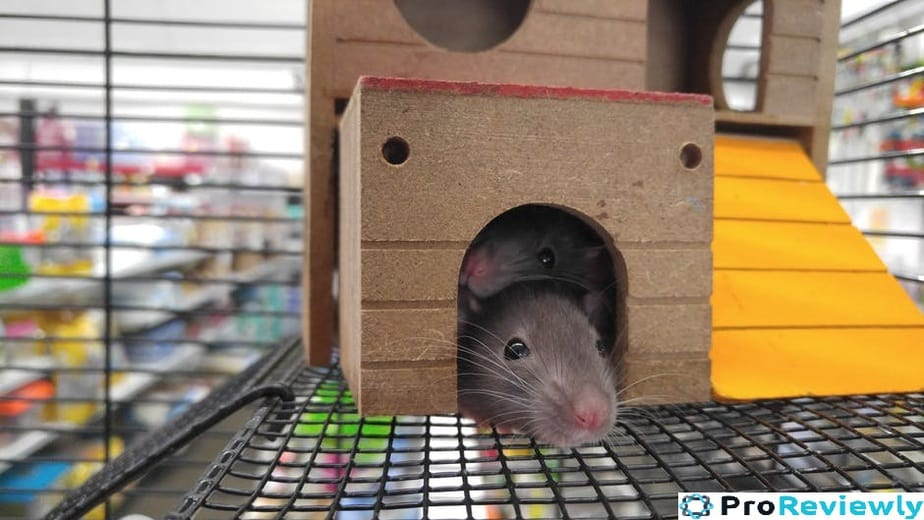 Best Humane mouse Trap