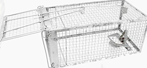 best humane traps for squirrel  rat  and mouse
