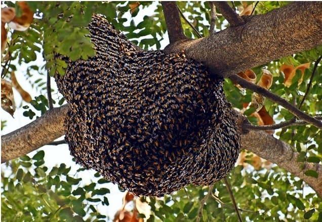 Free Honey Bee