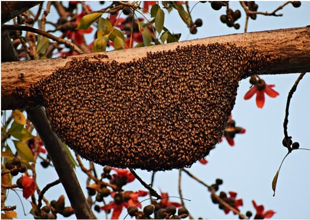 Hiving Swarm