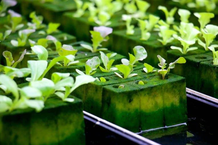 hydroponics grow system